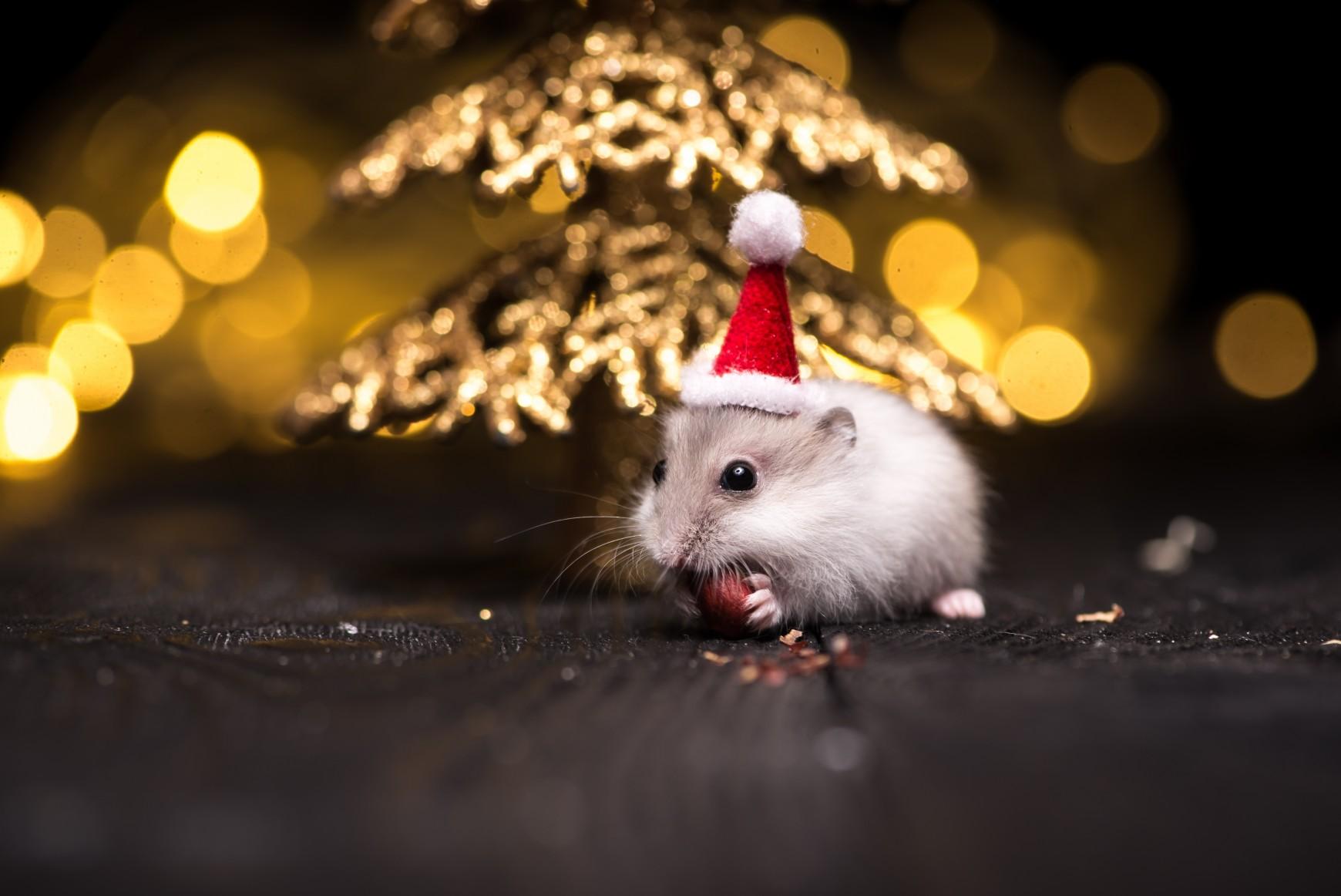 Die Weihnachtsmaus